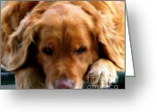 Sleeping Dog Greeting Cards - Golden Dreams Greeting Card by Karen Wiles