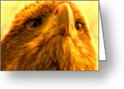 Bird Of Prey Digital Art Greeting Cards - Golden Eagle Portrait Greeting Card by Jan Bonner