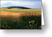 Featured Artwork Prints Greeting Cards - Golden Fields Forever Greeting Card by Kathy Yates