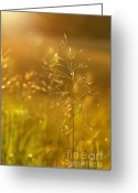 Scenic Digital Art Greeting Cards - Golden glow Greeting Card by Sandra Cunningham