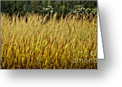 Upright Greeting Cards - Golden Grasses Greeting Card by Meirion Matthias