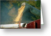 "\\\\\\\""boone County Photo Greeting Cards - Golden Harvest Greeting Card by Cricket Hackmann"