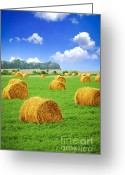 Farm Greeting Cards - Golden hay bales in green field Greeting Card by Elena Elisseeva