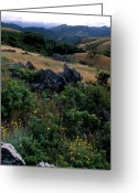 Landscapes Framed Prints Greeting Cards - Golden Hills of Summer Greeting Card by Kathy Yates