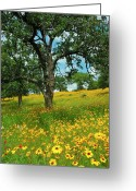 Texas Hill Country Greeting Cards - Golden Hillside Greeting Card by Robert Anschutz