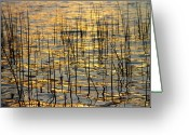 Sunset Wall Art Greeting Cards - Golden Lake Ripples Greeting Card by James Bo Insogna