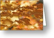 Maple Leaf Greeting Cards - Golden Light Autumn Maple Leaves Greeting Card by Jennie Marie Schell