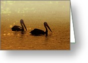 Pelican Photo Greeting Cards - Golden Morning Greeting Card by Mike  Dawson