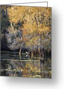 Florida Living Greeting Cards - Golden On The River Greeting Card by Carolyn Marshall