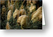Feathery Greeting Cards - Golden Pampas in the Wind Greeting Card by DigiArt Diaries by Vicky Browning