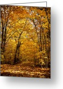 Red Leaves Greeting Cards - Golden Path Greeting Card by Kamil Swiatek