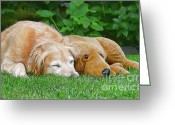 Sleeping Dog Greeting Cards - Golden Retriever Buddies Greeting Card by Jennie Marie Schell