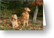 Hunting Dogs Greeting Cards - Golden Retriever Dogs Autumn Greeting Card by Jennie Marie Schell