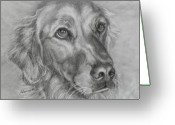 Pencil Drawing Drawings Greeting Cards - Golden Retriever Drawing Greeting Card by Susan A Becker