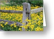 Debbie Johnson Greeting Cards - Golden-Rod  Crowd Out Greeting Card by Deborah  Crew-Johnson
