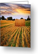 Bales Greeting Cards - Golden sunset over farm field in Ontario Greeting Card by Elena Elisseeva