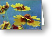 Tickseed Greeting Cards - Golden Tickseed In Bloom Greeting Card by Dianne Liukkonen