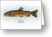 Game Drawings Greeting Cards - Golden Trout Greeting Card by Ralph Martens
