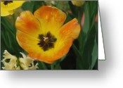 Designers Choice Digital Art Greeting Cards - Golden Tulip Painting Greeting Card by Don Wright