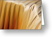 Macro Greeting Cards - Golden Waterfall Greeting Card by Kimberly Gonzales