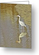 Heron.birds Greeting Cards - Golden waters Greeting Card by Sharon Lisa Clarke