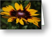 Macro Greeting Cards - Golden Yellow Flower Greeting Card by Kimberly Gonzales