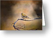 Backyard Goldfinch Digital Art Greeting Cards - Goldfinch In Deep Thought Greeting Card by J Larry Walker