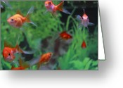 Goldfish Greeting Cards - Goldfish Greeting Card by Kakki**