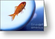Lustrous Greeting Cards - Goldfish swimming in a small fishbowl Greeting Card by Sami Sarkis