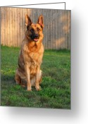 Purebreed Greeting Cards - Good Boy Greeting Card by Angie McKenzie