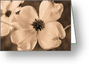 Dogwood Blossom Greeting Cards - Good Friday Greeting Card by Kristin Elmquist