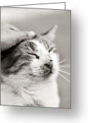 Human Hand Greeting Cards - Good kitty Greeting Card by Laura Melis