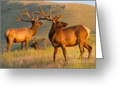 Gloaming Greeting Cards - Good Looking Guys Greeting Card by Katie LaSalle-Lowery