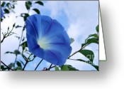 Morning Glory Greeting Cards - Good Morning Glory Greeting Card by Cathy  Beharriell