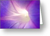 Sanibel Island Greeting Cards - Good Morning Glory Greeting Card by Melanie Moraga