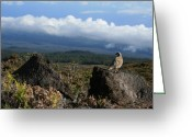 Above The Clouds Greeting Cards - Good Morning Maui Greeting Card by Sharon Mau
