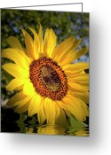 Good Morning Greeting Cards - Good Morning Sunshine  Greeting Card by H G Mielke