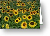 Good Morning Greeting Cards - Good Morning Sunshine Greeting Card by Joachim G Pinkawa