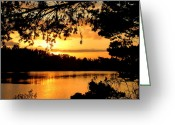 Reflected Tree Greeting Cards - Good Night Lake Bradley Greeting Card by Cindy Wright