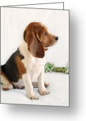 Dog Portrait Greeting Cards - Good ol Snoopy Greeting Card by Christine Till