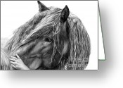 Horse Drawings Greeting Cards - Goodwill and Harmony Greeting Card by Sheona Hamilton-Grant