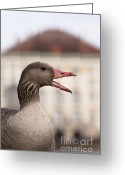 Nymphenburg Greeting Cards - Goose at Nymphenburg palace Greeting Card by Andrew  Michael