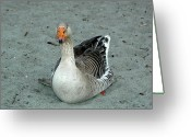 Ken Sjodin Greeting Cards - Goose9 Greeting Card by Ken  Sjodin