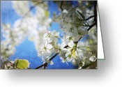 Bradford Greeting Cards - Gorgeous Day Greeting Card by Toni Hopper