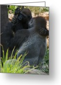 Ape. Great Ape Greeting Cards - Gorilla Embrace Greeting Card by Chris Brewington