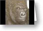 Animal Art Greeting Cards - Gorilla Greeting Card by John Shook