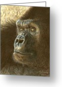Wildlife Drawings Greeting Cards - Gorilla Greeting Card by Marlene Piccolin