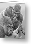Lowland Greeting Cards - Gorilla Montage Greeting Card by Larry Linton