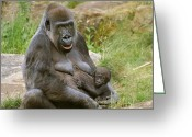 Lowland Greeting Cards - Gorilla Mother and Baby Greeting Card by Julie L Hoddinott