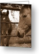 Gossiping Greeting Cards - Gossip at the Fence Greeting Card by Karen Musick